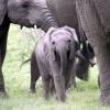 elephant-babyen-jorgen-thula-thula-juli-07-1