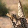 egern-chobe-okt-04